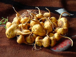 Picture of Maca Roots